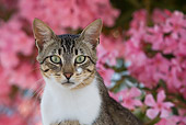 CAT 02 KH0205 01