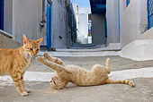 CAT 02 KH0214 01