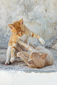 CAT 02 KH0215 01