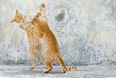 CAT 02 KH0225 01