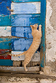 CAT 02 KH0227 01