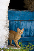 CAT 02 KH0229 01