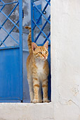 CAT 02 KH0230 01