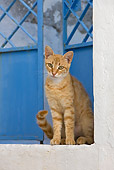 CAT 02 KH0234 01
