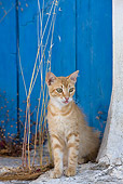 CAT 02 KH0235 01