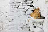 CAT 02 KH0237 01