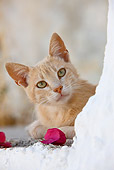 CAT 02 KH0241 01