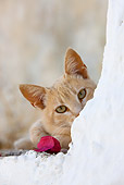 CAT 02 KH0242 01