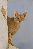 CAT 02 KH0245 01
