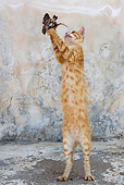 CAT 02 KH0250 01