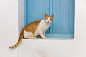 CAT 02 KH0254 01
