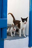 CAT 02 KH0259 01