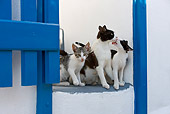 CAT 02 KH0260 01