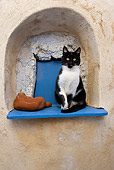 CAT 02 KH0263 01