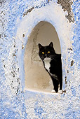 CAT 02 KH0264 01