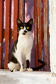 CAT 02 KH0268 01