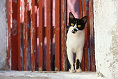 CAT 02 KH0269 01