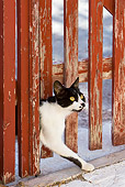 CAT 02 KH0270 01