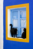 CAT 02 KH0275 01