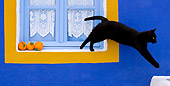 CAT 02 KH0278 01