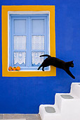 CAT 02 KH0279 01