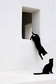 CAT 02 KH0280 01