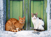 CAT 02 KH0292 01