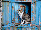 CAT 02 KH0293 01