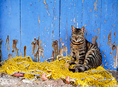 CAT 02 KH0296 01