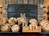 CAT 02 KH0297 01