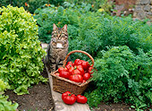 CAT 02 KH0298 01