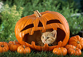 CAT 02 RC0002 01