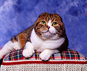 CAT 02 RK0002 02