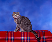 CAT 02 RK0004 01