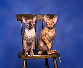 CAT 02 RK0009 01