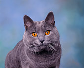 CAT 02 RK0033 02