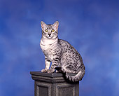CAT 02 RK0051 05