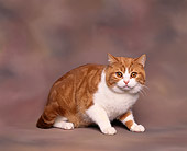 CAT 02 RK0054 04