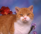 CAT 02 RK0110 01