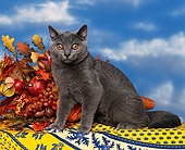CAT 02 RK0123 06
