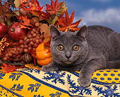 CAT 02 RK0125 04