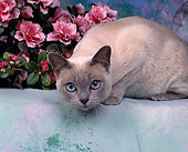 CAT 02 RK0136 03