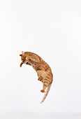CAT 02 RK0172 11