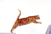 CAT 02 RK0173 09