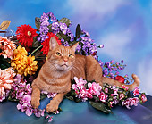 CAT 02 RK0194 03