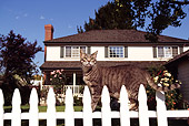 CAT 02 RK0305 02