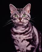 CAT 02 RK0323 02