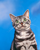 CAT 02 RK0334 03