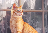 CAT 02 RK0377 02