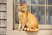 CAT 02 RK0377 08